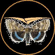 Entomologiczna